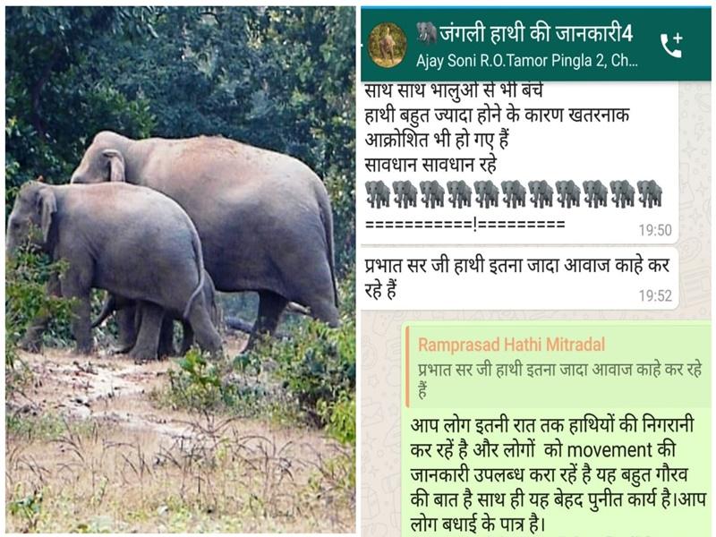 Chhattisgarh News: हाथियों से बचने छत्तीसगढ़ के युवाओं ने सोशल मीडिया को बनाया ढाल, मिल रही कामयाबी