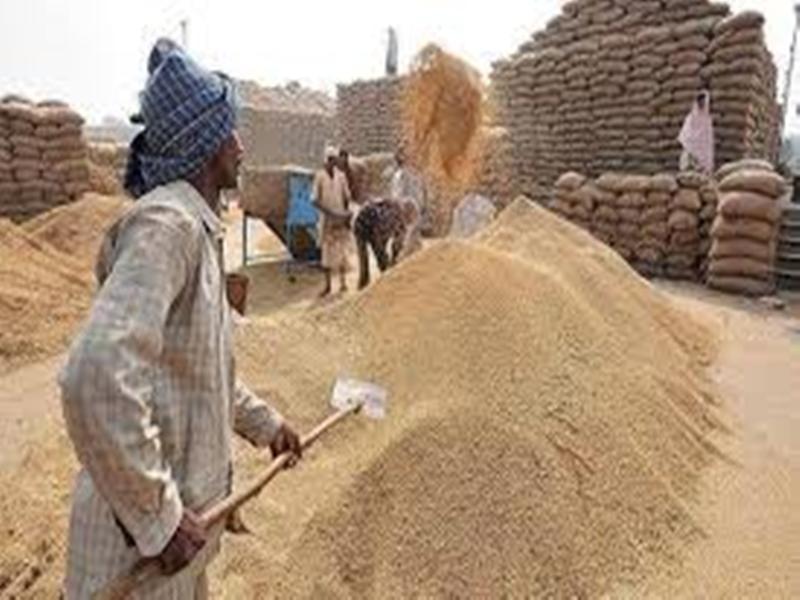 MP Wheat MSP: मध्य प्रदेश में किसान समर्थन मूल्य पर गेहूं बेचने के लिए आज से करा सकेंगे पंजीयन