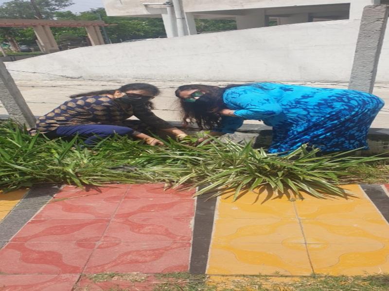 Bhopal News : राजधानी में हरियाली बनी रहे, इसके लिए किया जा रहा है पौधरोपण