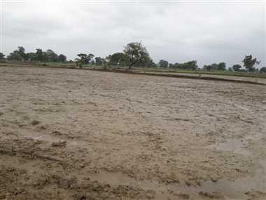 पिछले साल से 48 मिमी औसत वर्षा कम, रोपाई-बोआई पिछड़ा