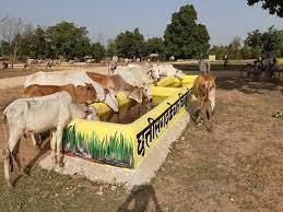 Bilaspur News: पहले फांके की थी जिंदगी, अब काम इतना कि समय का करना पड़ रहा प्रबंधन