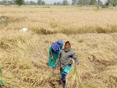 राजीव गांधी किसान न्याय योजनाः महासमुंद जिले के किसानों को अब तक मिल चुका है 391 करोड़ रुपये