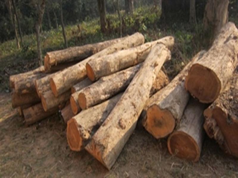 मध्य प्रदेश के प्रत्येक जिले में 'लकड़ी बाजार' तैयार करेगी सरकार, वन विभाग से विस्तृत योजना मांगी