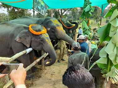 शरारती हाथी विक्रम और अनुभवी सिद्धनाथ के साथ लक्ष्मी, स्मिता, अंजुगम मनाएंगी पिकनिक