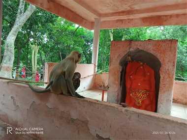 नन्हेश्वर धाम में बंदरों के उत्पात से श्रद्घालु परेशान