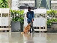 Ratan Tata: तेज बारिश में छाता लेकर कुत्ते के पास खड़ा रहा कर्मचारी, फोटो देख रतन टाटा ने किया यह काम