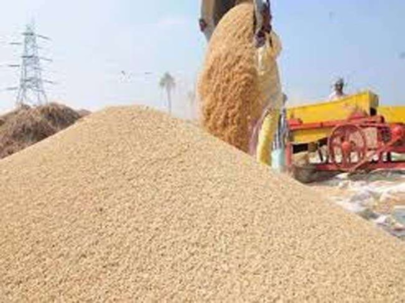 मध्य प्रदेश में अब गेहूं के बाद पौने चार लाख टन धान की होगी नीलामी, इस कारण होगा करोड़ों रुपये का नुकसान