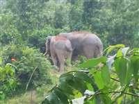 Elephant Attack in Marwahi: हाथियों ने मरवाही के उसाड़ में सात किसानों के फसल को पहुंचाया नुकसान