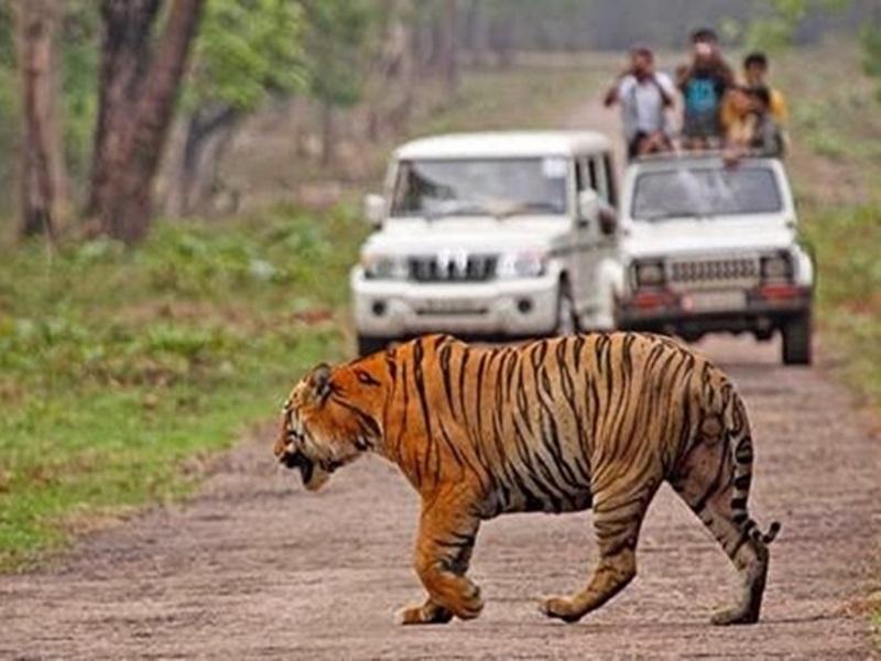 Bandhavgarh Tiger Reserve: अब जिप्सी चालकों की मनमानी रोकने के लिए हाईटेक इंतजाम