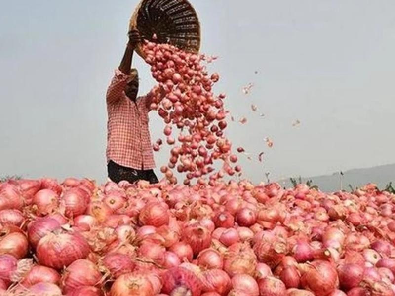 Onion Price: अच्छी खबर, 10 रुपए प्रति किलो तक सस्ता हुआ प्याज, नवरात्र खत्म होते ही बढ़ी मांग