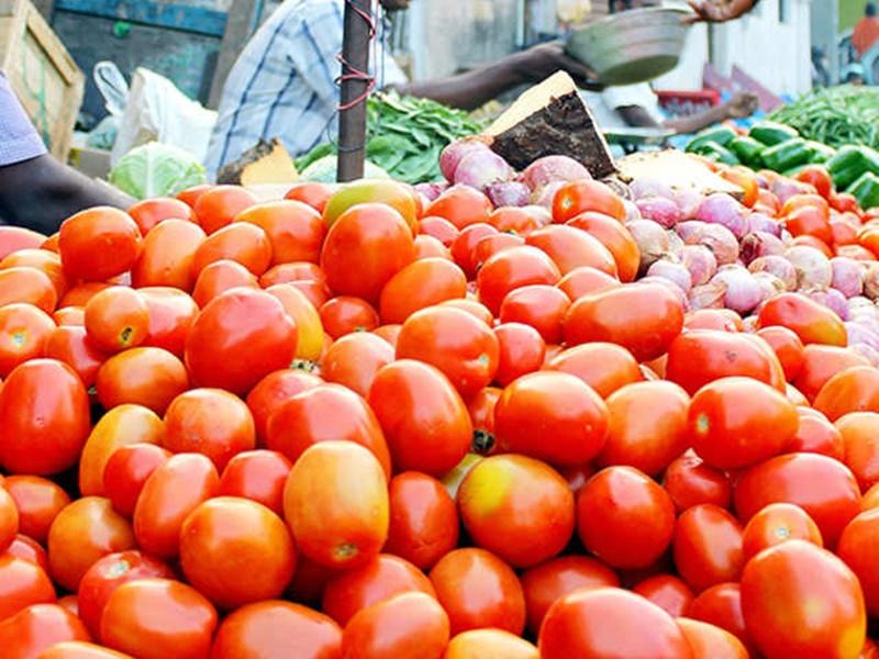 Chhattisgarh: बस्तर के बारामासी देसी टमाटरों की बाजार में बढ़ी मांग, स्वाद और सेहत से भरपूर