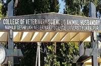 Jabalpur News: वेटरनरी विवि में नहीं होगी लिखित परीक्षा , असाइनमेंट पूरा करने पर मिलेंगे नंबर