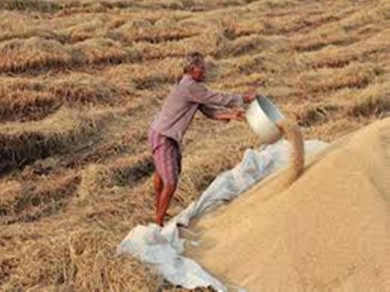 मध्य प्रदेश में 25 नवंबर से होगी धान की सरकारी खरीद, 15 अक्टूबर तक होगा पंजीयन