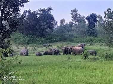 20 जंगली हाथियों ने मचाया उत्पात, फसलें नष्ट कीं, यातायात भी रहा बाधित