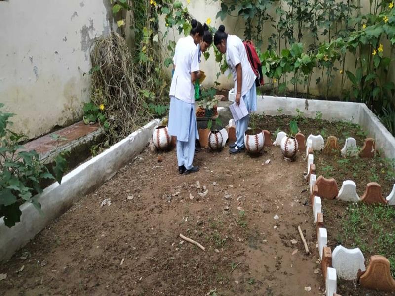 Dengue in Gwalior: कुछ क्षेत्र डेंगू के पसंदीदा, यहां विभाग सुस्त