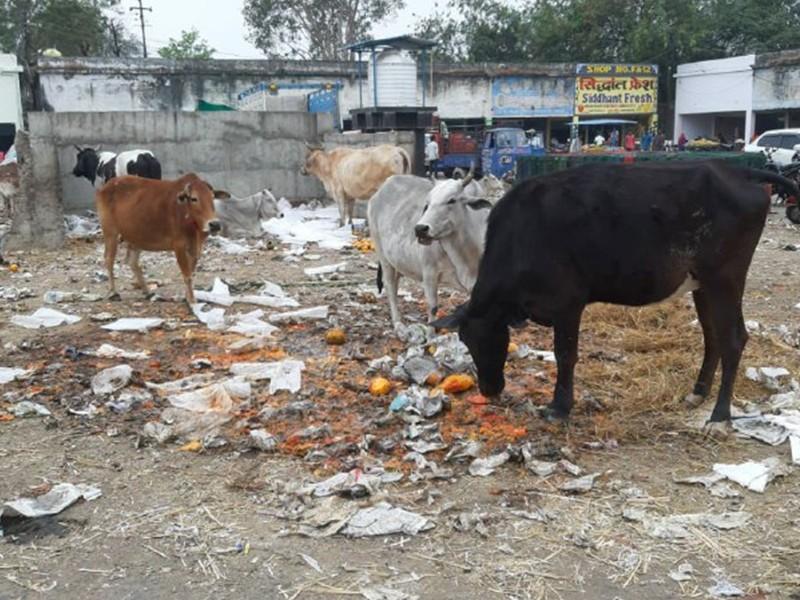 Jabalpur News: एलआइजी कालोनी में रोजाना घरों से नहीं उठ रहा कचरा