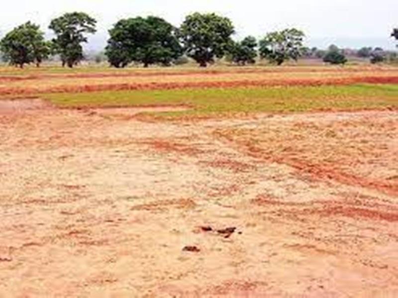 Madhya Pradesh News: बेची जा रही सरकारी जमीन की दर अब कलेक्टर गाइडलाइन से होगी तय