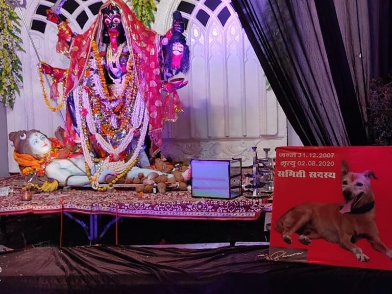 जबलपुर में समिति सदस्य डॉग भूरा की स्मृति में मनाया दुर्गोत्सव