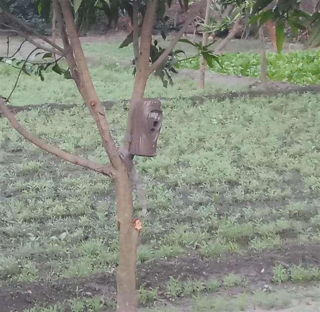 जबलपुर में तेंदुआ पकड़ने लगाए ट्रैप कैमरे, कैद हो रहीं कुत्तों की तस्वीरें