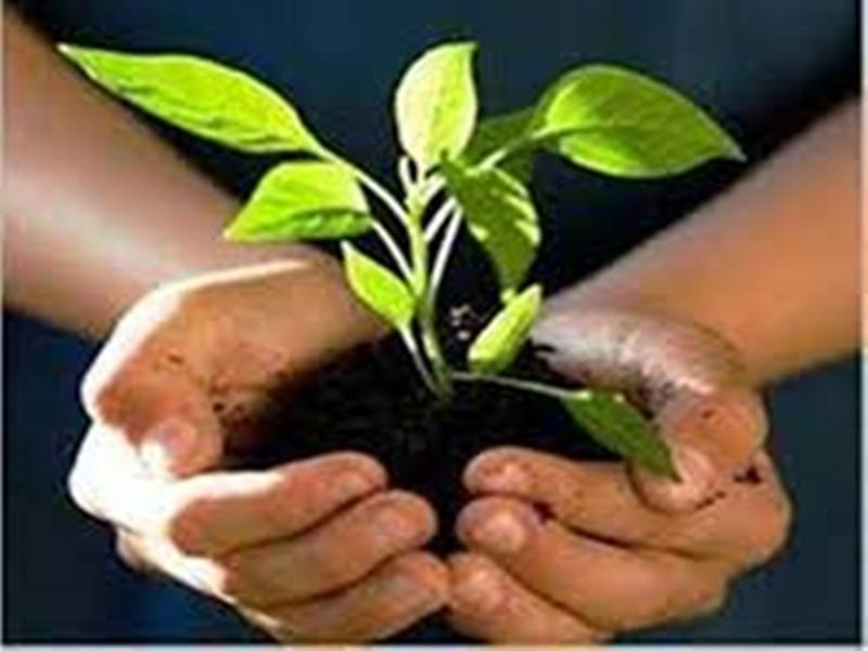 Balaghat News: 25 युवाओं ने मोक्षधाम की बंजर जमीन को कर दिया हरा-भरा