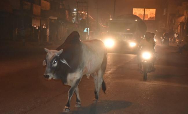 आंगनवाड़ी में बच्चों को गाय का दूध दिए जाने का निर्णय सराहनीय
