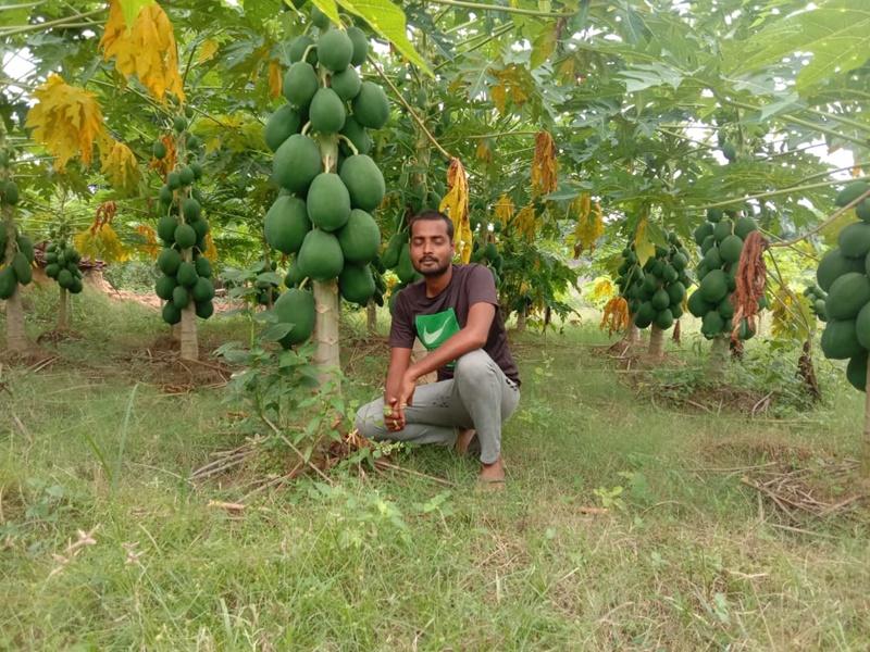 Innovation In Farming: युवा किसान अंकित ने तैयार की बागवानी, दूसरे किसान भी हो रहे प्रात्साहित