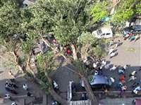 निगम के अफसर बोले जमीन में बनी पानी की टंकियों के कारण जड़े कटने से गिरा पेड़