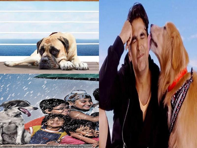 'दिल धड़कने दो' के प्लूटो से लेकर 'चिल्लर पार्टी' के भिडू तक इन फिल्मों में कुत्ते रहे हीरो