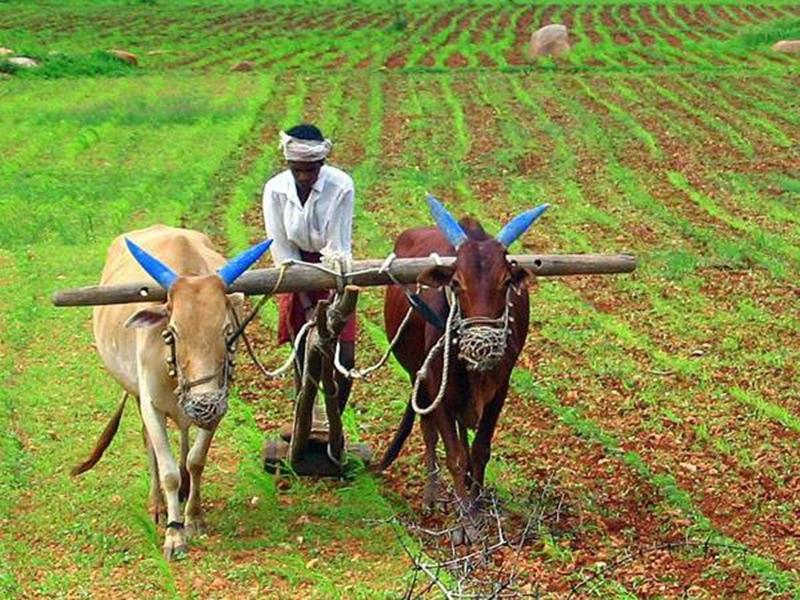 5 करोड़ किसानों की आय बढ़ाएगी सरकार! Aadhaar की मदद से किया जाएगा ऐसा