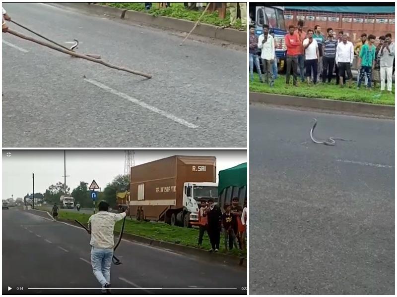 Madhya Pradesh News: इंदौर-अहमदाबाद राष्ट्रीय राजमार्ग पर सांप ने रोका यातायात, देखिये वीडियो