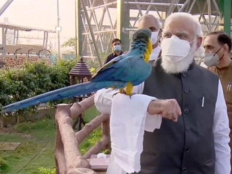 Gujarat Visit में प्रधानमंत्री नरेंद्र मोदी का पक्षी प्रेम फिर झलका, जानिये दिन भर का अपडेट