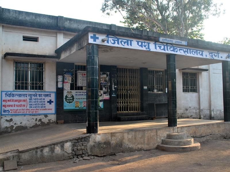 Raipur News : जिले में 15 वेटनरी अस्पताल, लेकिन किसी में भी आपात कालीन सेवा नहीं