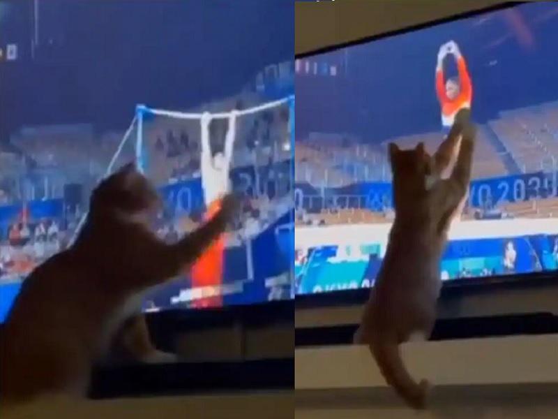 Tokyo Olympics: जिमनास्ट के प्रति बिल्ली की उत्सुकता लोगों को खूब आ रही पसन्द, वीडियो हो रहा वायरल