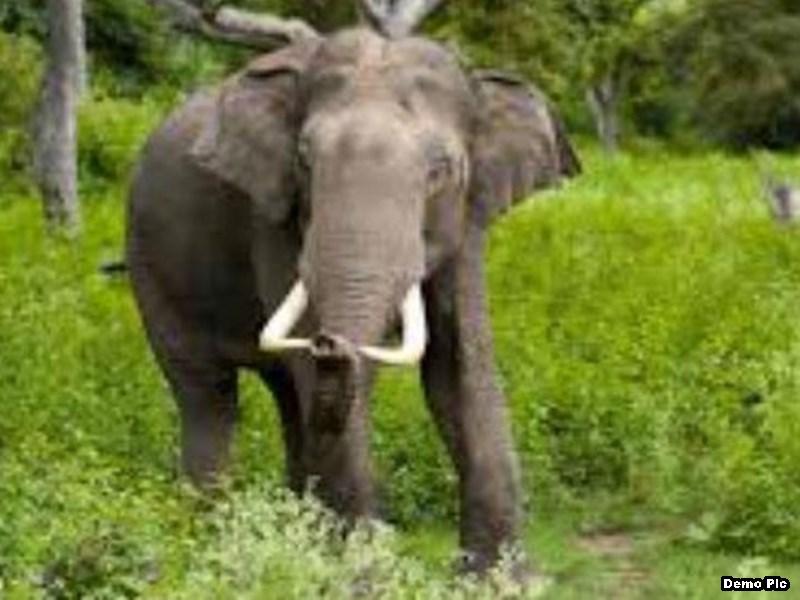महासमुंद में हाथी खदेड़ने देर से पहुंचा अमला तो ग्रामीणों ने कर दी वनपाल की पिटाई