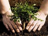 150 पेड़ों के 'कातिल' 1500 पौधे रोप करेंगे प्रायश्चित