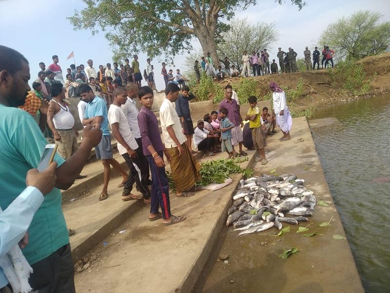 राजनांदगांव में तालाब में जहर डाला, बड़ी संख्या में मछलियों की मौत