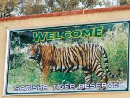 सरिस्का में बाघिन का हुआ शिकार, सवा लाख में बेची खाल