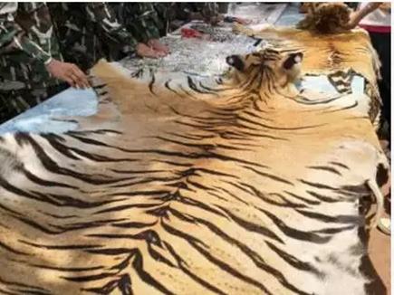 रुपयों की बारिश करने बाघ की खाल पर बैठकर कर रहे थे तांत्रिक क्रिया, चार गिरफ्तार